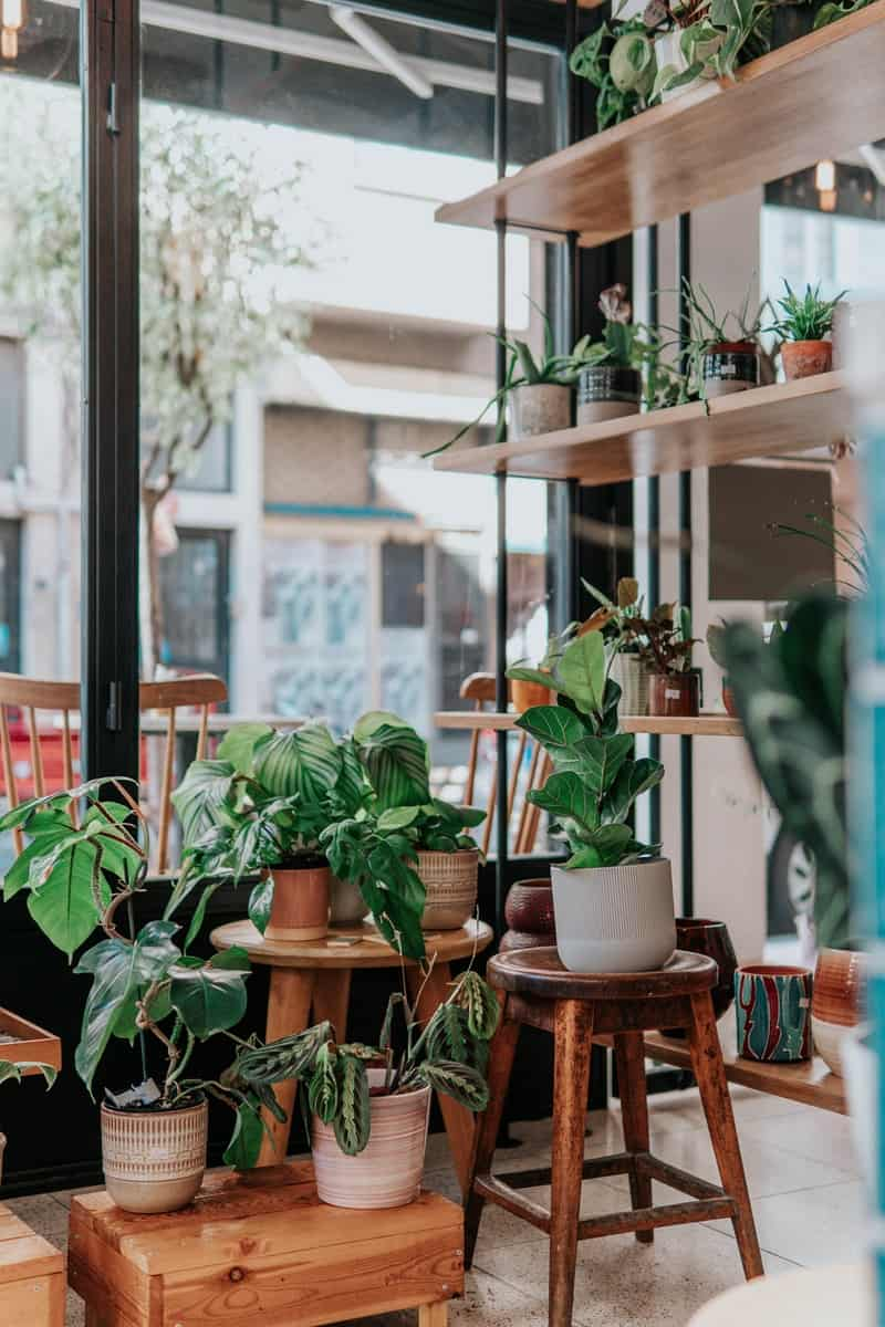 green potted plants on brown wooden seat